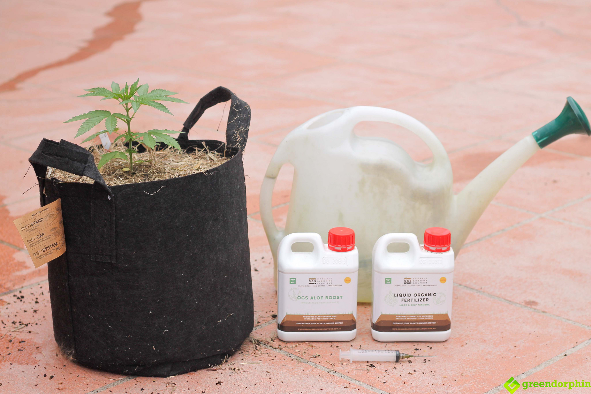 Repot Your Cannabis Plants end steps