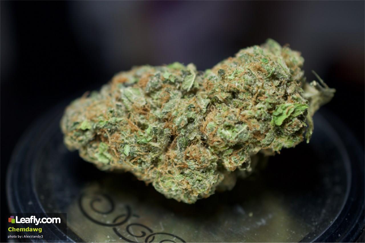 Marijuana Strain A to Z - ChemDog