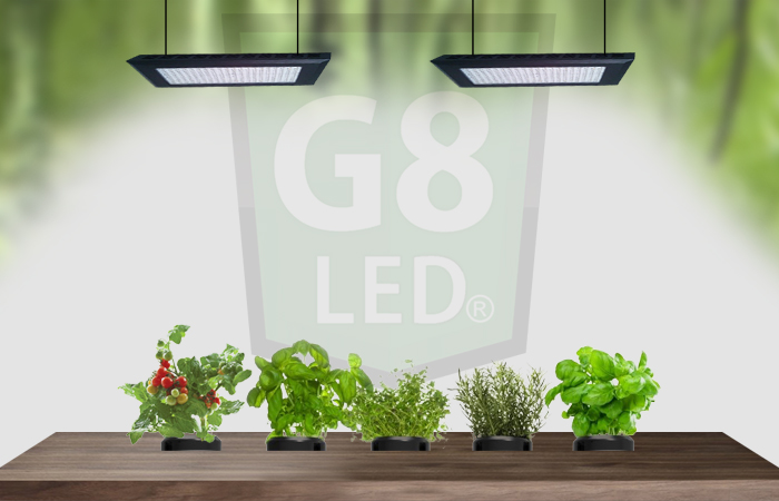 Grow Cannabis LED's