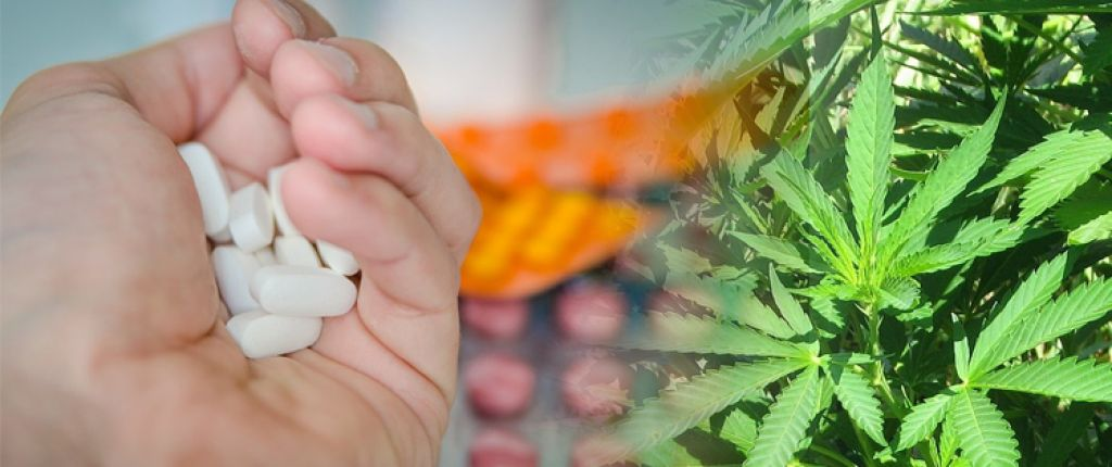 Western medicine versus cannabis