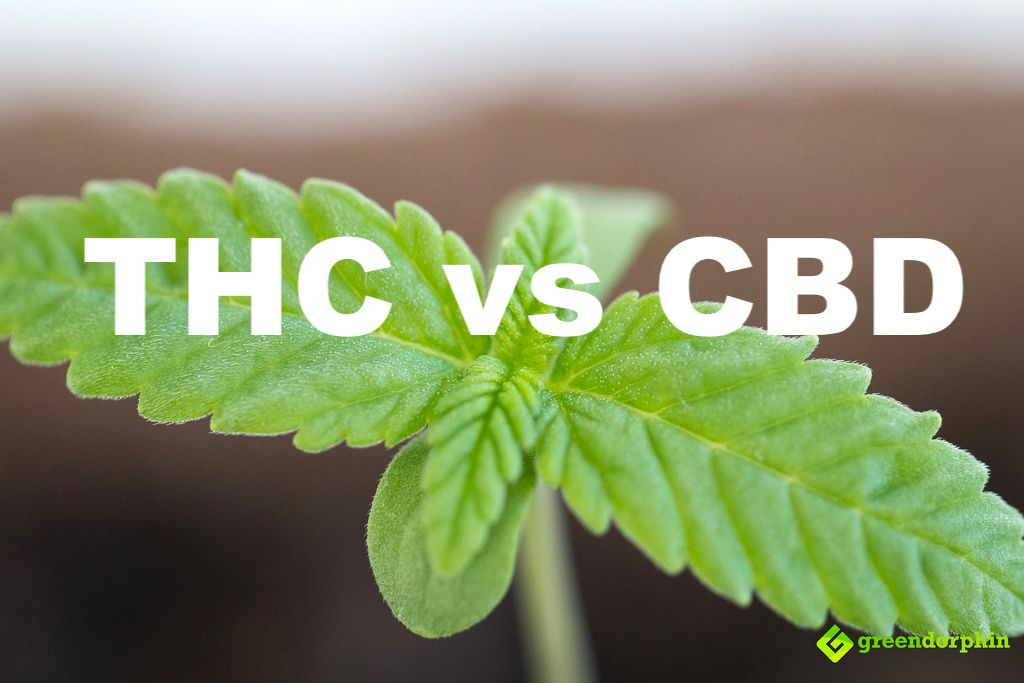 THC vs. CBD: What's What?