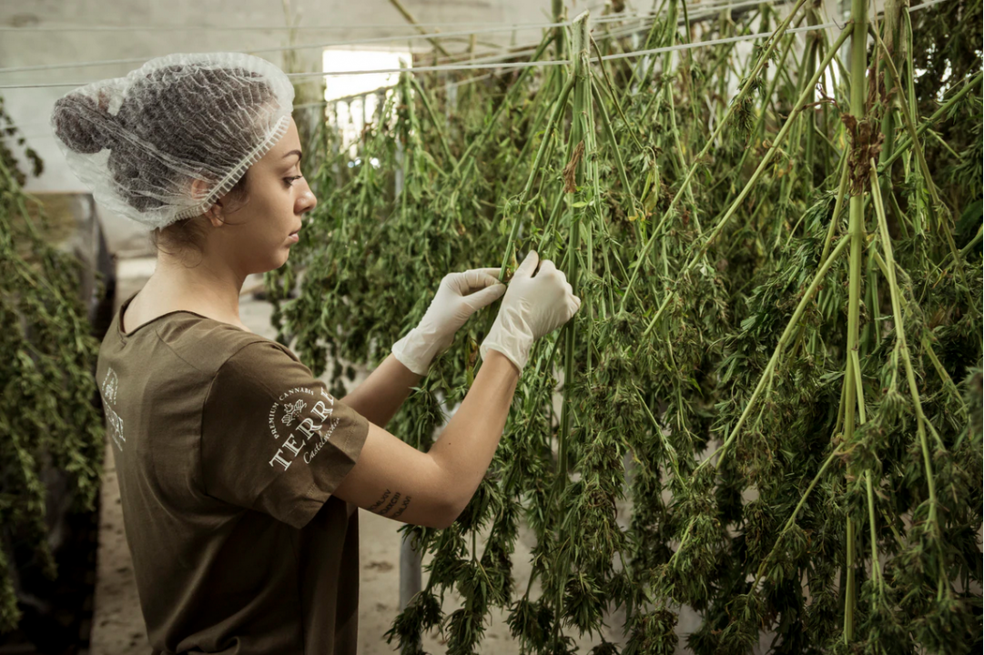 Starting a Cannabis Business? Here's 4 Things You Should Know