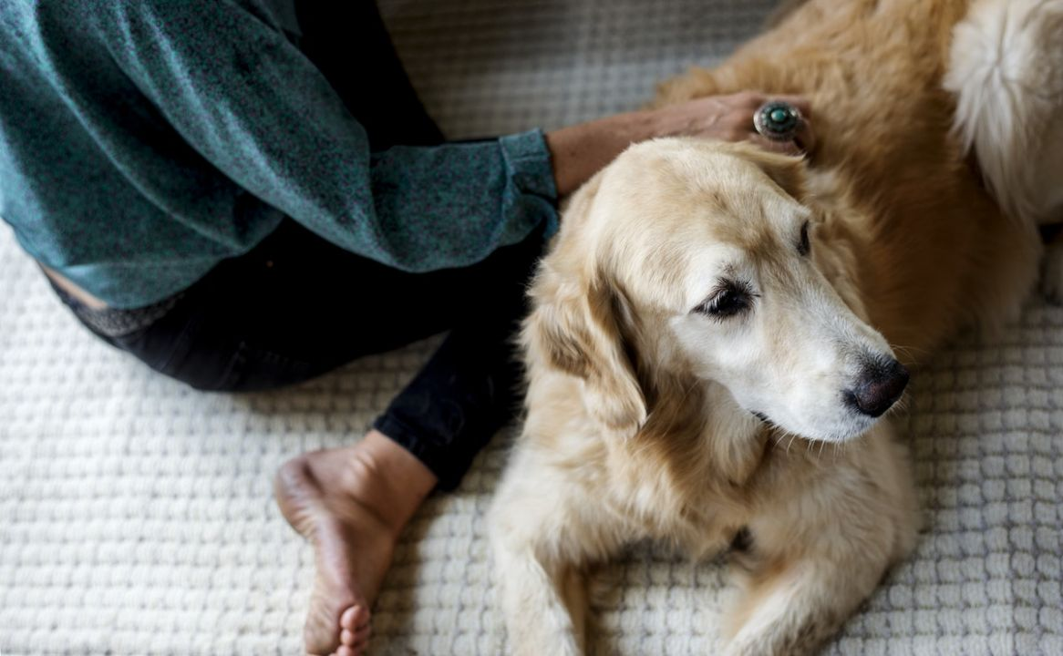 Human CBD vs Pet CBD: What is the Difference?