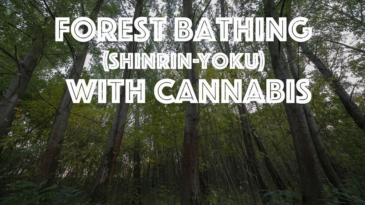Forest Bathing (Shinrin-Yoku) with Cannabis
