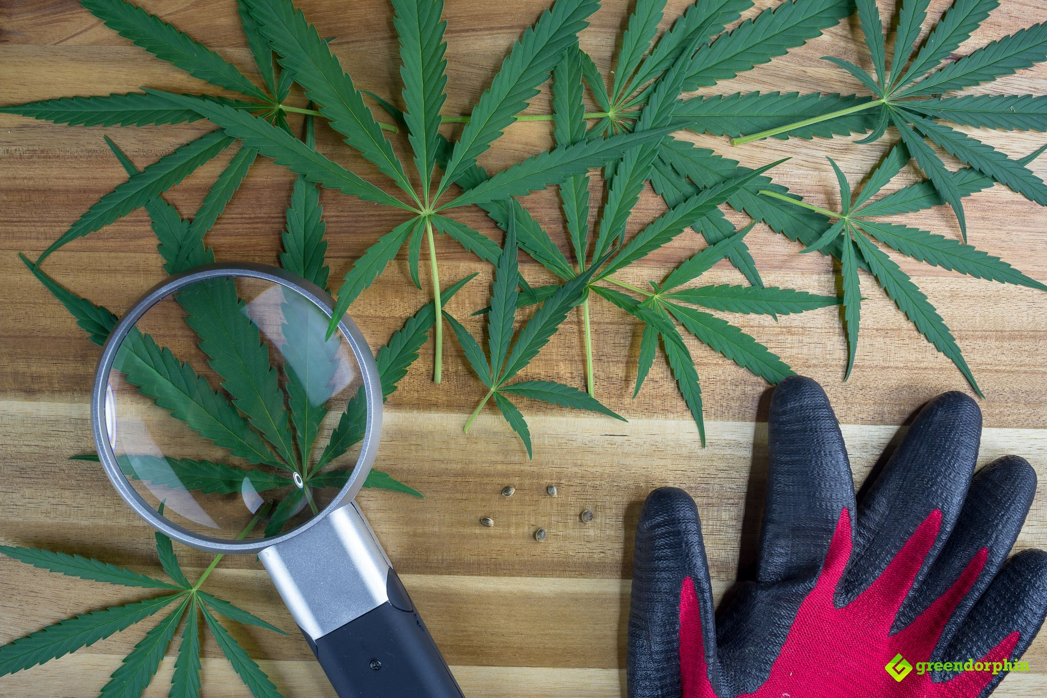 5 Reasons to Grow Your Own Weed