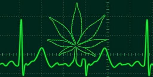 Statistics of Students Using Cannabis