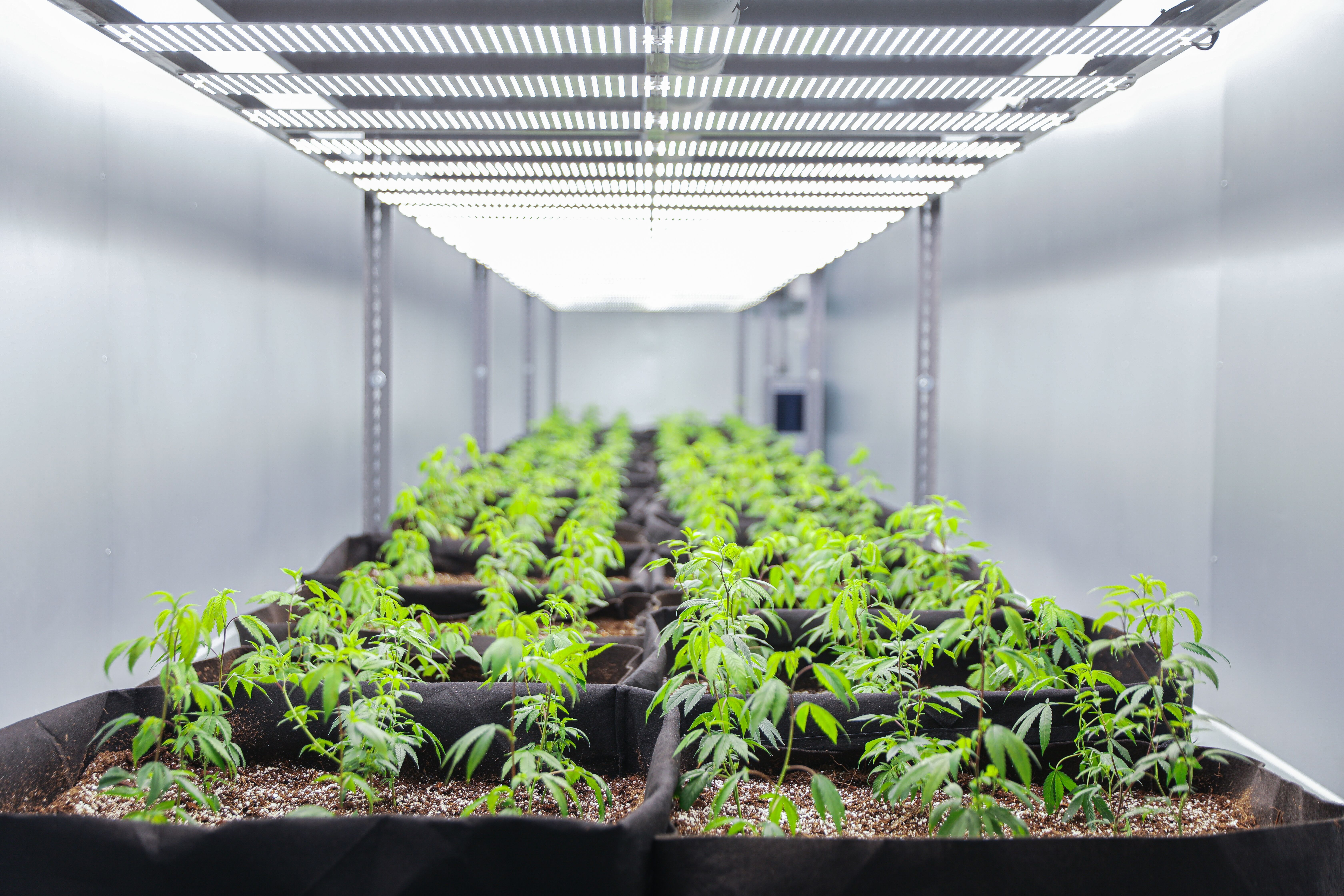 Could The Future of Cannabis Growing Be Inside a Shipping Container?
