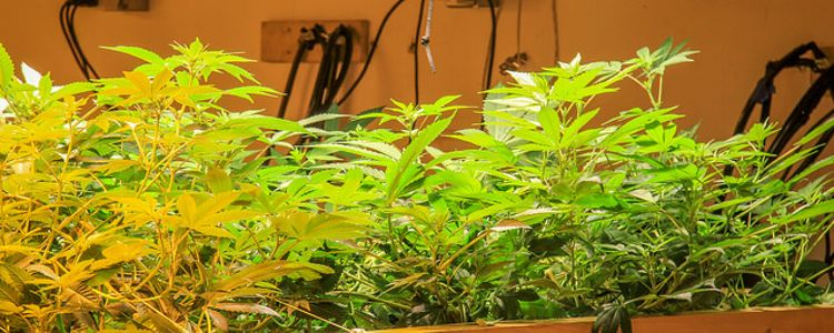 Setting up 'The Grow Room' - grow cannabis at home