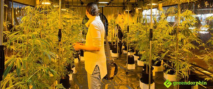 Marijuana and Blockchain - to manage supply chain