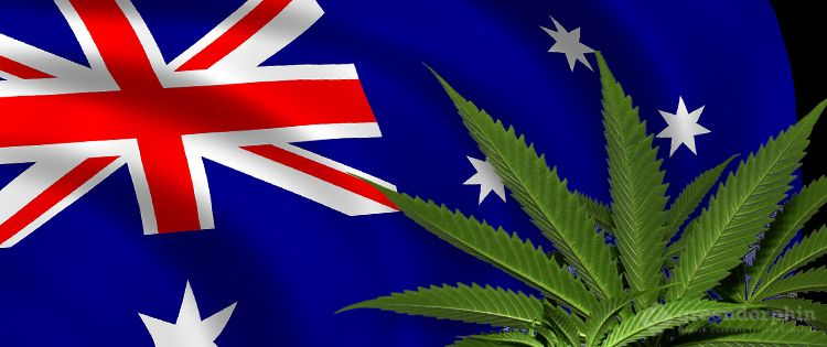 Accessing CBD Oil In Australia – Buying Over The Counter Or With A Doctor's Prescription?