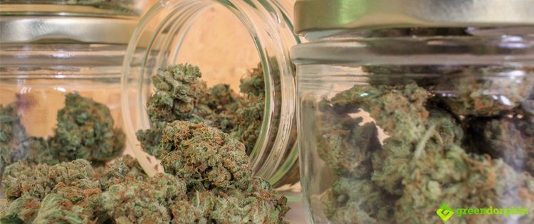 Proper storage of your cannabis can have a significant impact on both the longevity and quality of the bud.