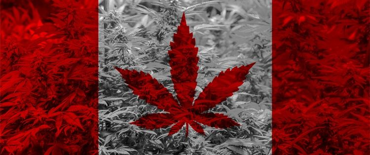 Online Dispensaries Canada