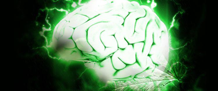 Human Brain and the Cannabinoid System