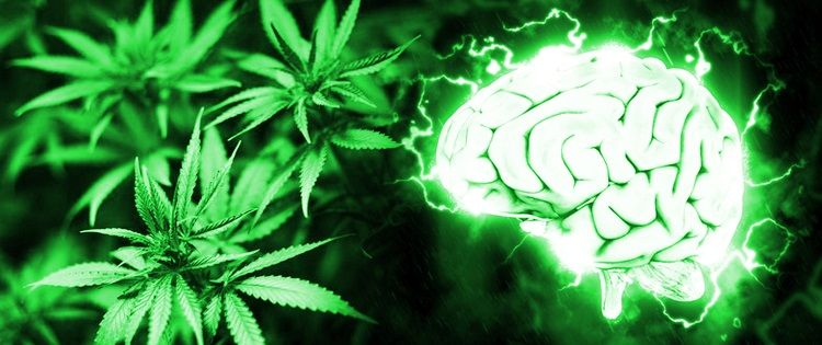 cannabis reduces risk of stroke and protects brain cells