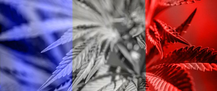 Paris Cannabis 'Coffee Shops' Raided and Closed by Police