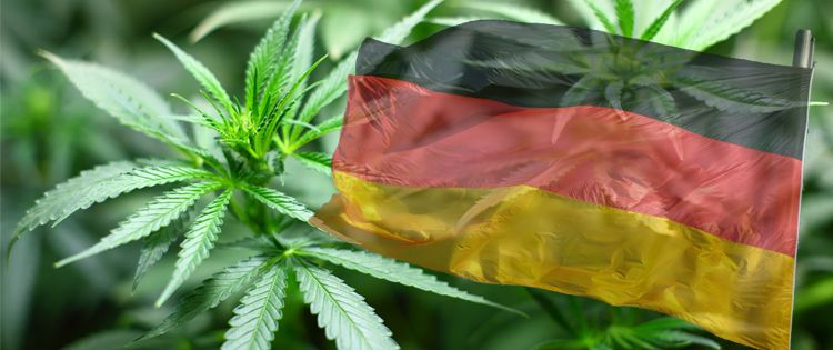 Whither The Cannabis Home Grow Movement In Germany Now?