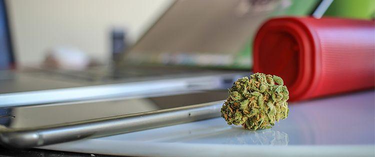 marijuana saves lives