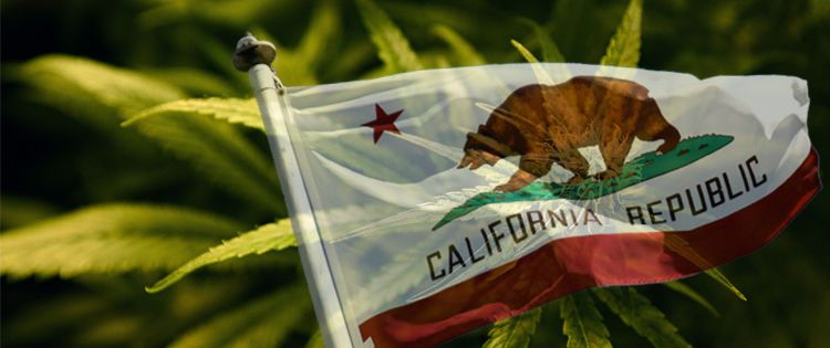 California Lower Cannabis Tax