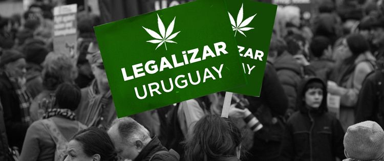 Cannabis Legalization in Uruguay