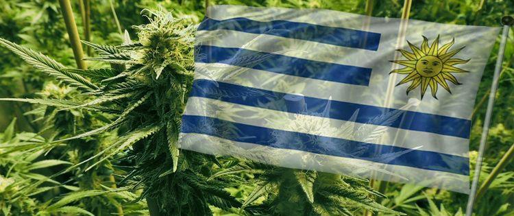 Uruguay's Experiment Legalization