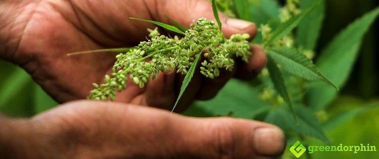 how hemp can save the planet