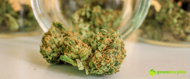 Cannabis Improves Cognitive Functions