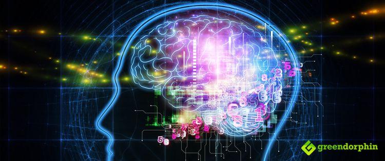 The Brain Grows Thanks To Cannabinoids