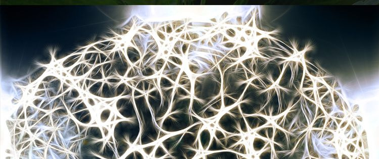 CBD - development and repair of neurons