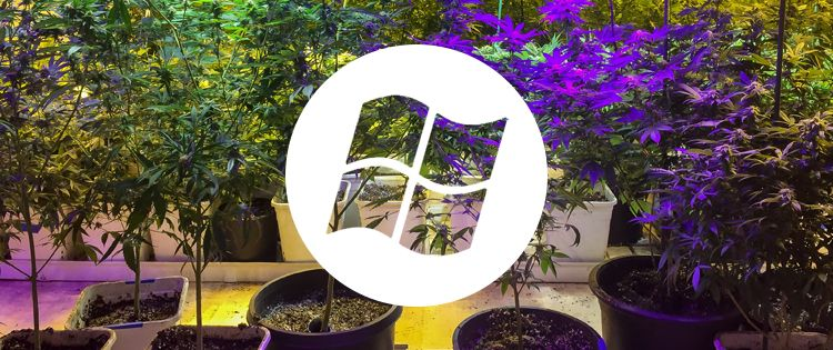 Microsoft joins the cannabis game