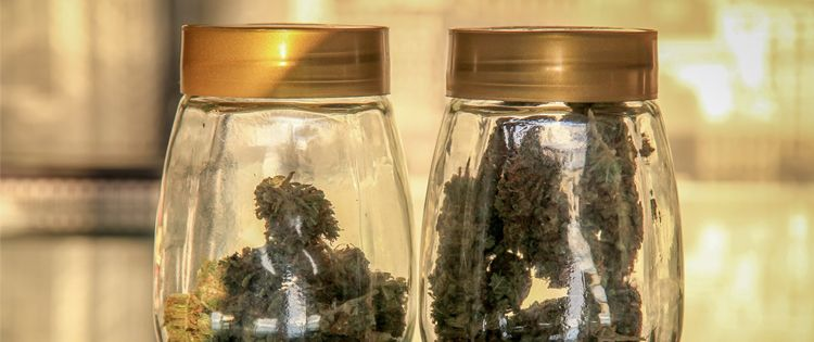 Preventing Marijuana Contamination: Is your weed safe for use?