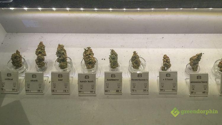 Cannabis in Spain- marijuana strains in barcelona