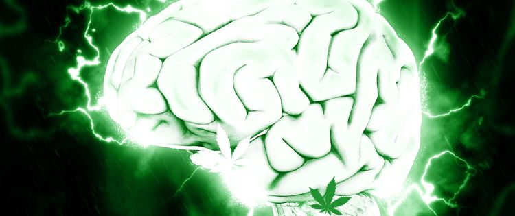 A Guide to the Endocannabinoid System