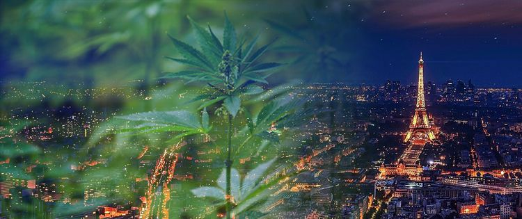 France Moves to Reform its Cannabis Laws