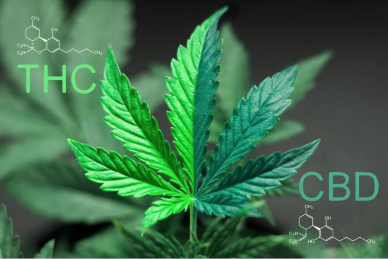 CBD vs. THC Concentration
