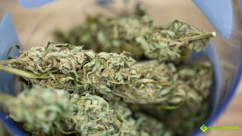 large cannabis flowers