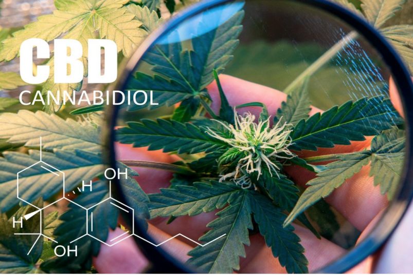 CBD Cannabidiol - Does CBD get you high?
