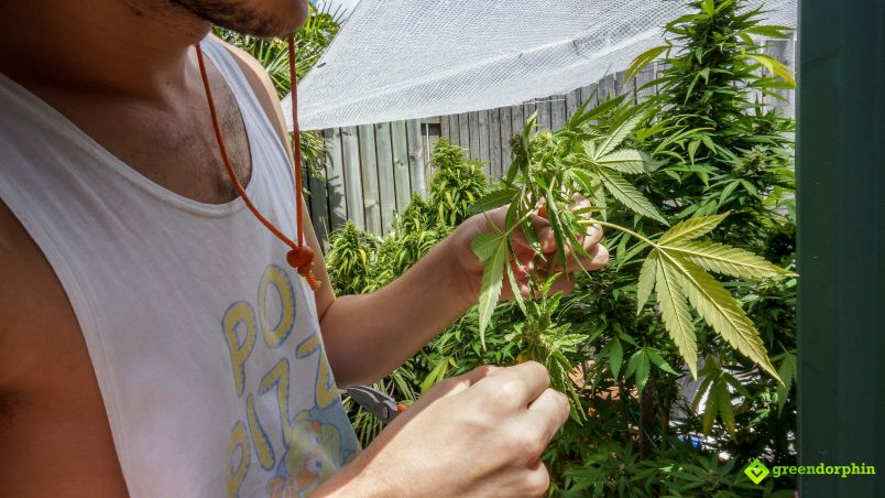 Grow organic weed