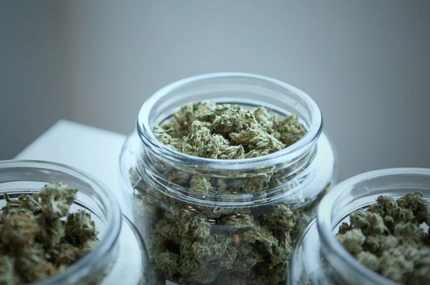 Who Needs Medical Cannabis and How Can It Help You?